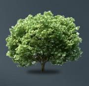 Einsparung von 97,23 Bäumen, gerettet dank der Herstellung von Eurograte Gitterrosten